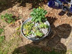 Visite d'un jardin à Orgeval