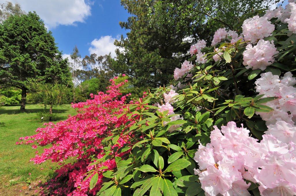 Parc de cornouaille couleur pays - Jardin botanique de cornouaille ...