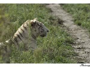 Dans l'ordre : Guépard d'Afrique du sud, Lynx de Sibérie, Manul, Serval, Tigre blanc, Lion blanc, Lion d'Angola, Lémuriens...
