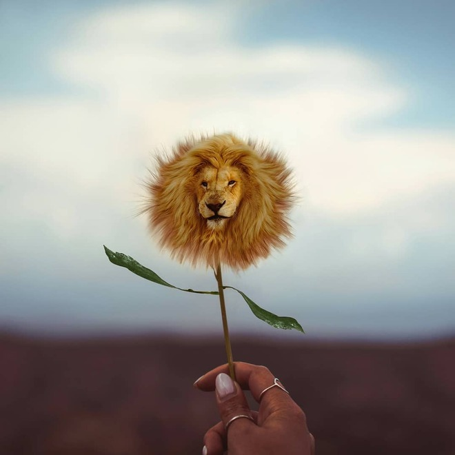 photo manipulation lion