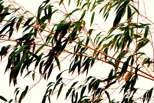 Clôture avec des bambous