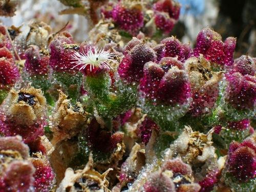 Les fleurs des ruines....