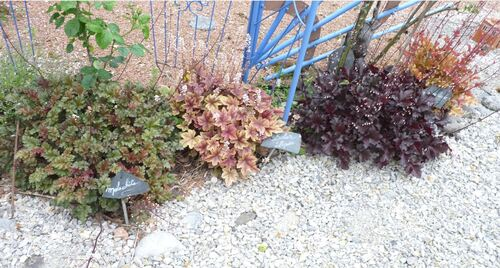 Evolution du jardin