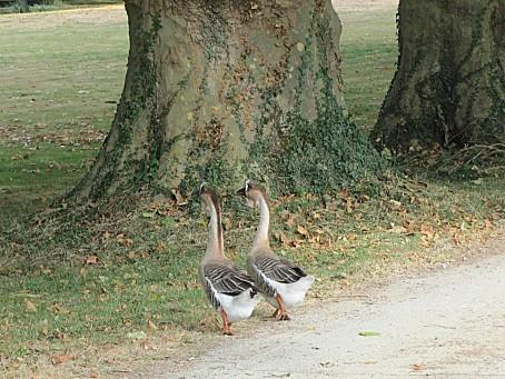 les-oiseaux-et-autres-volatiles-7967.JPG