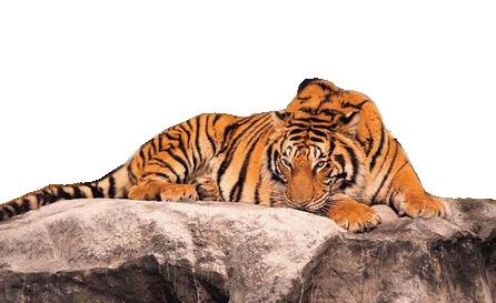 tubes tigres