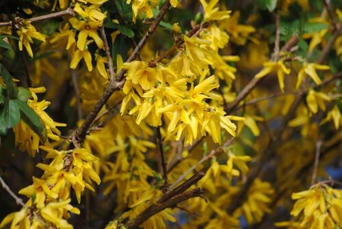 {autres photos} Le printemps et là... et ça se voit !