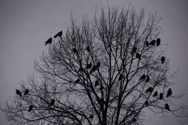 Les oiseaux ...