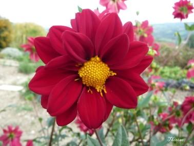 Fleurs d'automne (20)