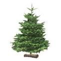 Le sapin de Noël: Histoire et tradition