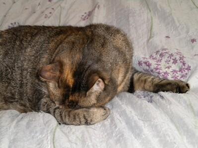 La vie rêvée de mon chat ( lecture: 3 min)