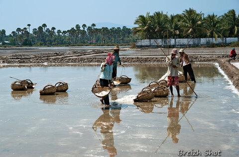 paludiers - Kampot