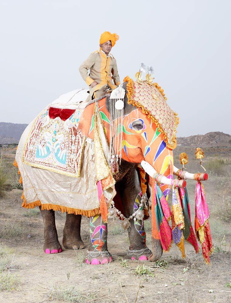 charles-freger-painted-elephants-6