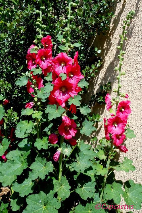 Des fleurs et des fleurs en ce lundi de Pentecôte