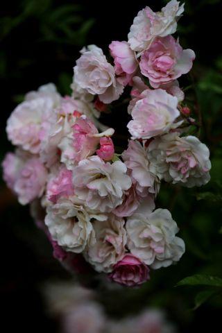 Romantisme absolu au jardin : la recette