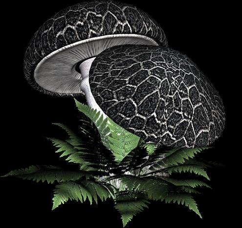 tubes champignons / feuillages