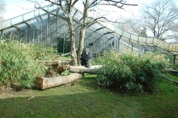 zoo cologne d50 2012 108