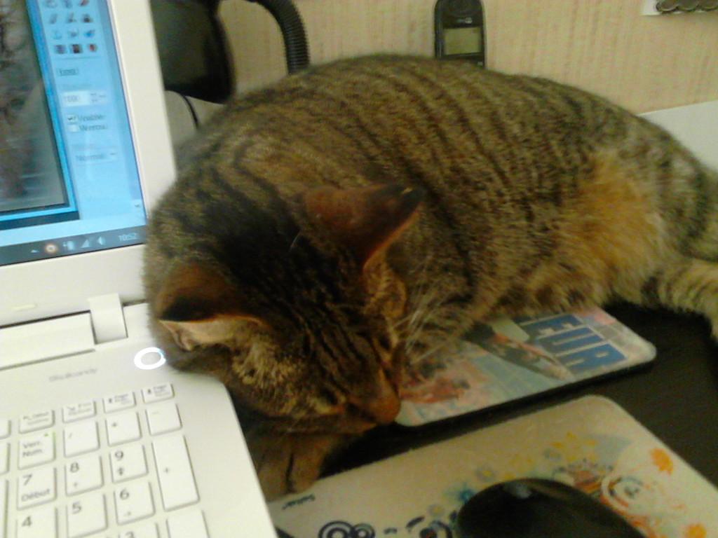 mon chat !      14