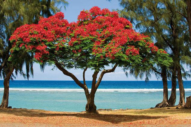 île de la Réunion