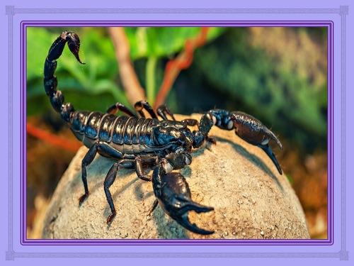 Le scorpion : la leçon de vie