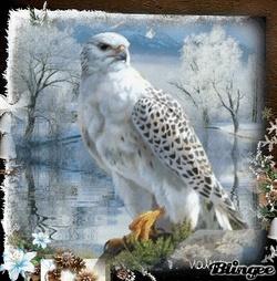 aigle blanc et noir
