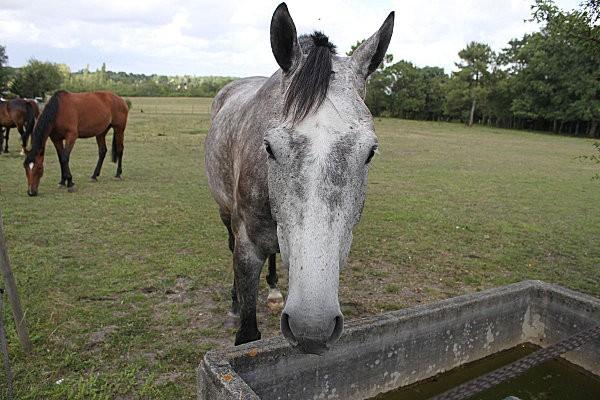chevaux -7-