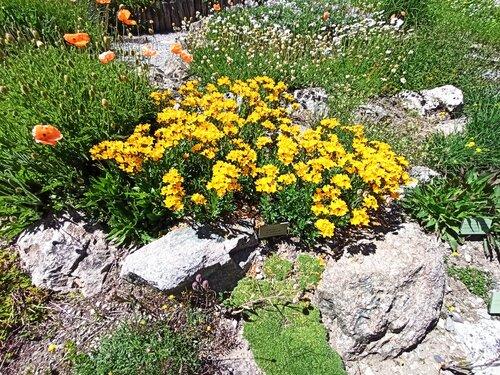 Jardin botanique du col du Lautaret 2058m  ( suite 4 )