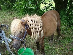 Poney bien coiffé