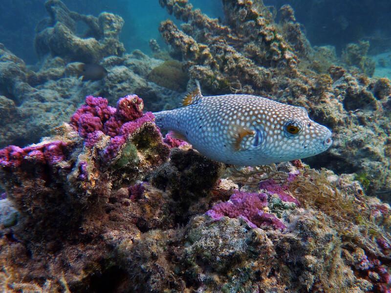 Un petit bonjour de Moorea, départ ce matin pour Fakarava (Tuamotu) - Polynésie française