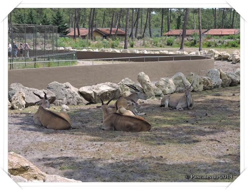 Zoo du Bassin d'Arcachon à La Teste de Buch - 8/20