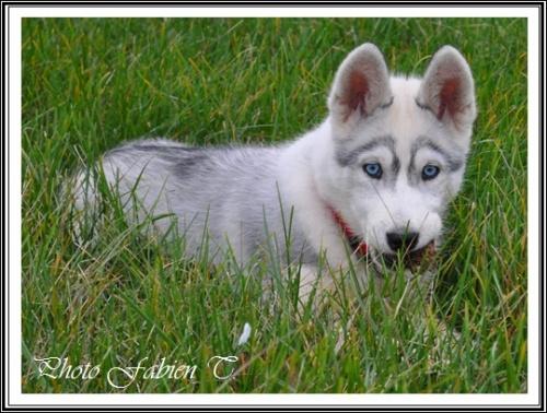 Géluna (3,5 mois)