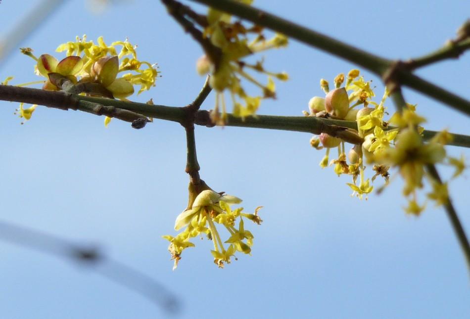 A la recherche du printemps