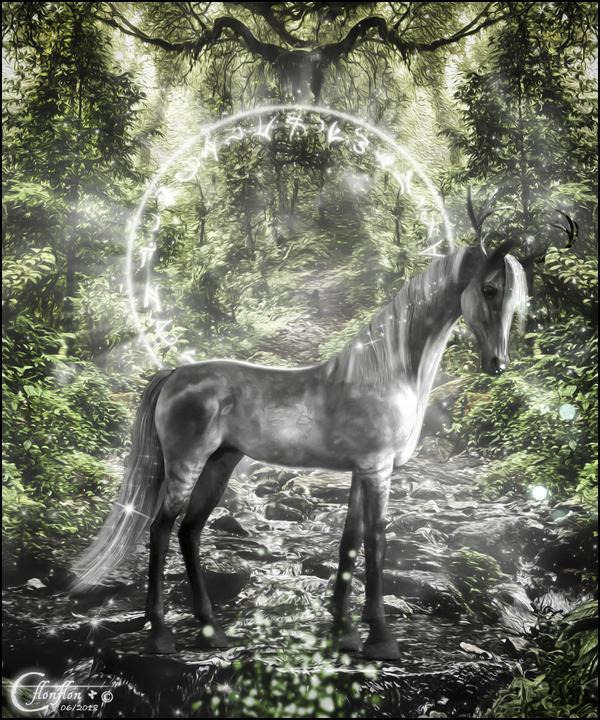 Magique Forêt Verte