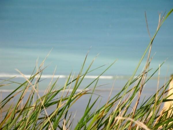 Varengeville, bord de falaise