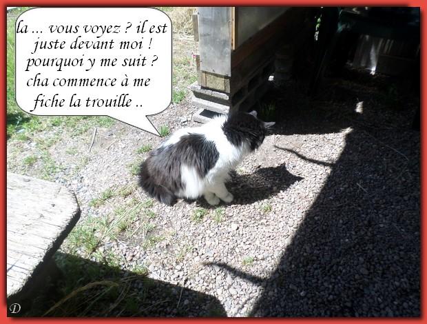 Le chat noir ...