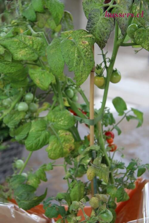 plante de l'école agricole de liège