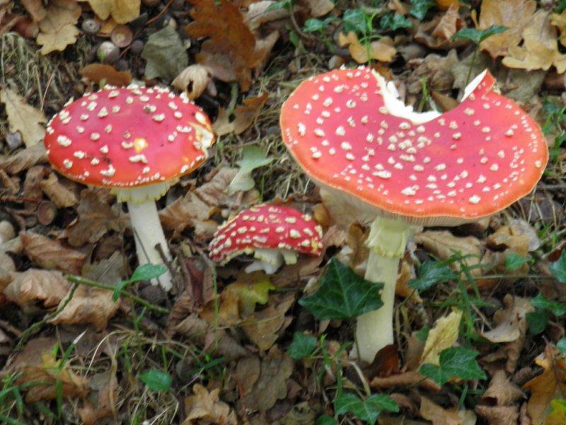 Les champignons un peu partout...