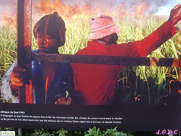PHOTOs-PEUPLES---NATURE-2010-LA-GACILLY-099.jpg