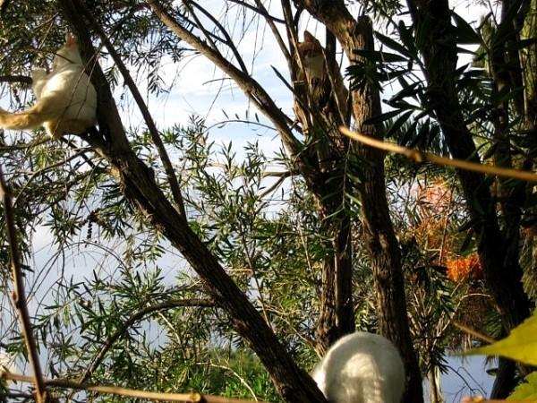 7-LAZZI-EDELWEISS-KIWI-JANVIER-2011.jpg