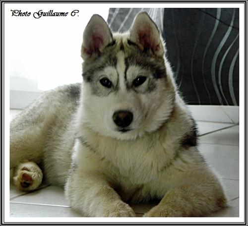 Ianko (4 mois)
