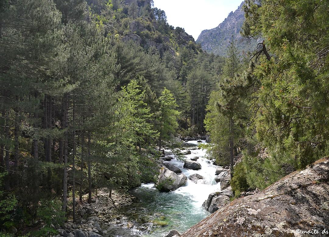 La Restonica - Corse