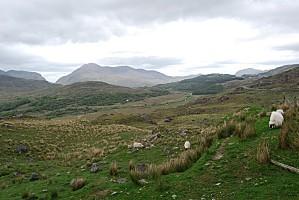 Vues du Kerry - Irlande 2011 007