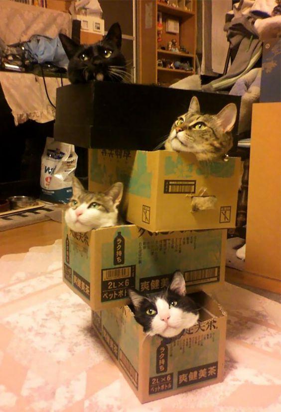 30 photos de chats qui se couchent absolument n'importe où !
