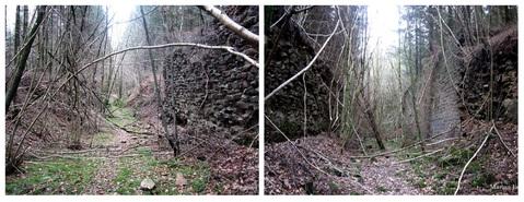 Un bond dans l'histoire au coeur de la forêt