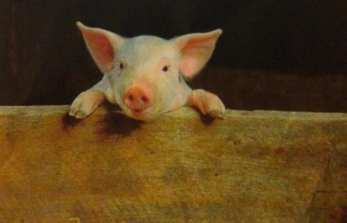 Cochon Grillé chez Adrien - Samedi 6 juillet 2013...