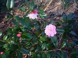 Dans mon jardin en Février 2014...