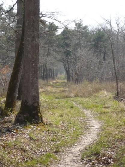 Promenade en forêt 9