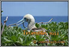 Montage audiovisuel sur l'Île Tromelin de 3 minutes