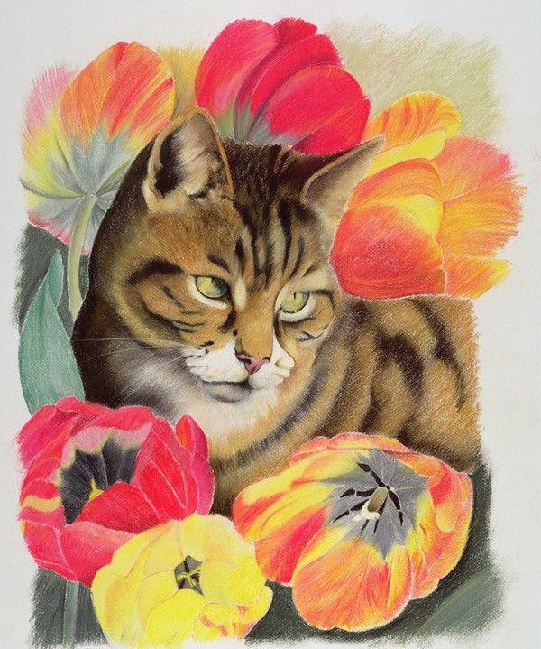 Les chats vus par Anne Robinson