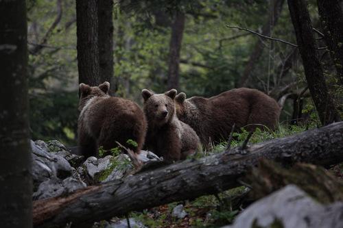 Des hommes et des ours