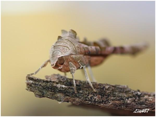 Papillons-5036-meticuleuse-face.jpg